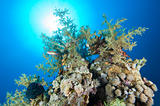 Tropical coral reef in the sun