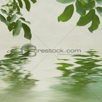 Green leaves and chestnuts  reflecting in the water