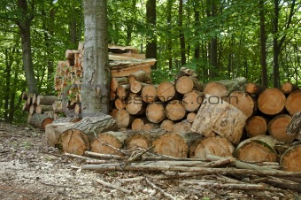 Pile of chopped woods in the forest