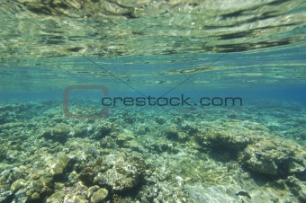 Top of a tropical coral reef under the surface
