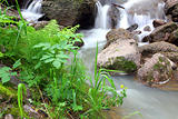 waterfall stream in summer woods