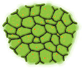 Schematic representation of living cells - vector