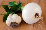Basil onion and garlic