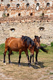 Horses in old castle
