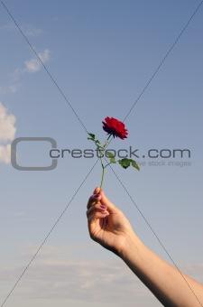 Tiny rose ring.