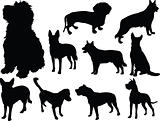 dog collection 2