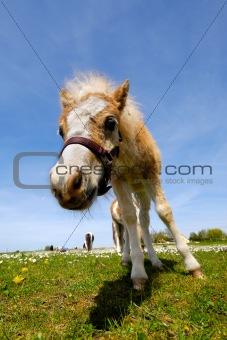 Foal on green grass at summer