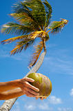 Coconut drink and palm
