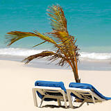 Sun lounger and palm at exotic beach