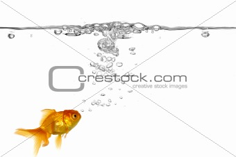 Goldfish and air bubbles