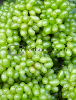 Green grapes - edible background