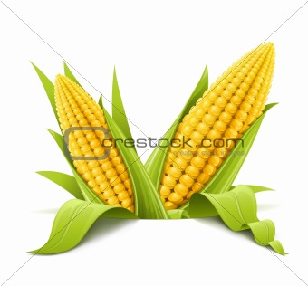 couple corncob