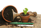 Potting a seedling