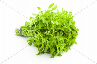 Fres Basil / spice herb on white background