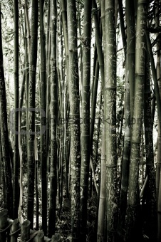 a bamboo forest full of trees