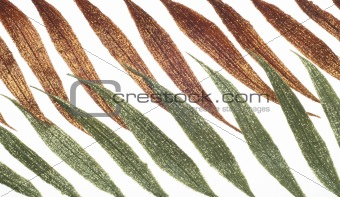 Abstract Glitter Leaf Shape Background