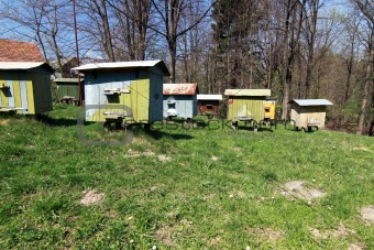 apiary with beehives