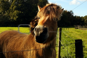 horse muzzle