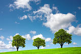 Three trees on a green hill