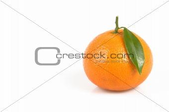 clemenvilla  Citrus clementina