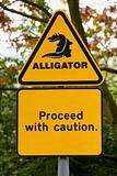 Alligator!!