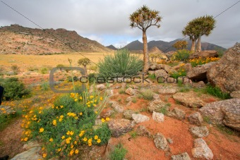 Wild flower landscape