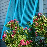 Window with oleander.