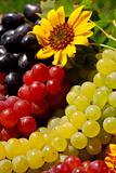 Grapes in Vintage Fruit Box