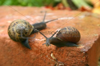 Two slow snails