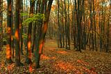Autumn forest - 1
