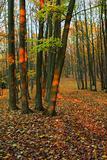 Autumn forest - 2