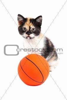 Kitten and basketball