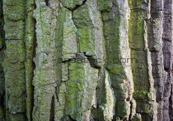 Green wood bark