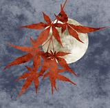 autumn moon collage, paper texture