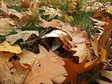 Hidding mushroom