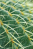 abstract cactus plant