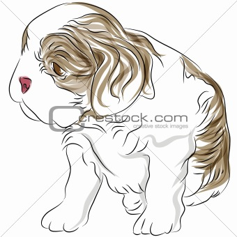 Cavalier King Charles Spaniel Puppy Dog Drawing