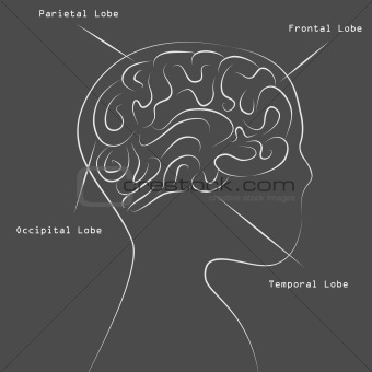 Blackboard Human Brain Map Drawing