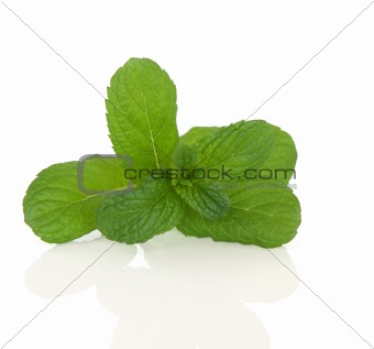 Apple Mint Herb