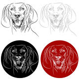 Redbone Coonhound Dog Portrait