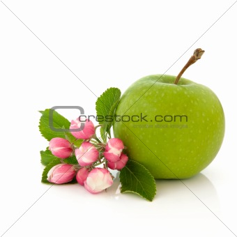 Apple Fruit and Flower Blossom