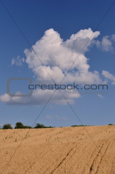Grain field and sky
