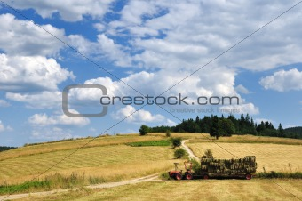 Harvest in mountain