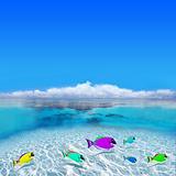 Tropical Holiday Destination