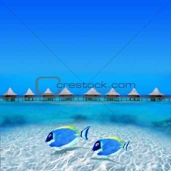 Image 4102792: Tropical Holiday Destination from Crestock