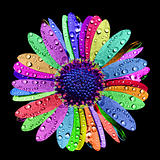 Rainbow Flower with Water drops