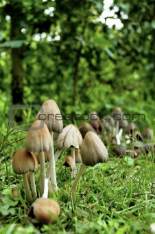 Mushrooms with Blurry Background