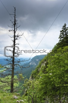 Dead tree on mountain with clouds