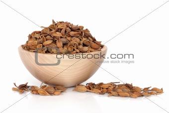 Forsythia Fruit Herb