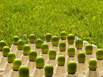 acorns series